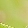 蚊子的嗡嗡聲 音效 模板 MP3