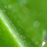 蚊子嗡嗡作響 音效 模板 MP3