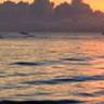 Seaside seagull beach river lake sea Sound Effects Template MP3