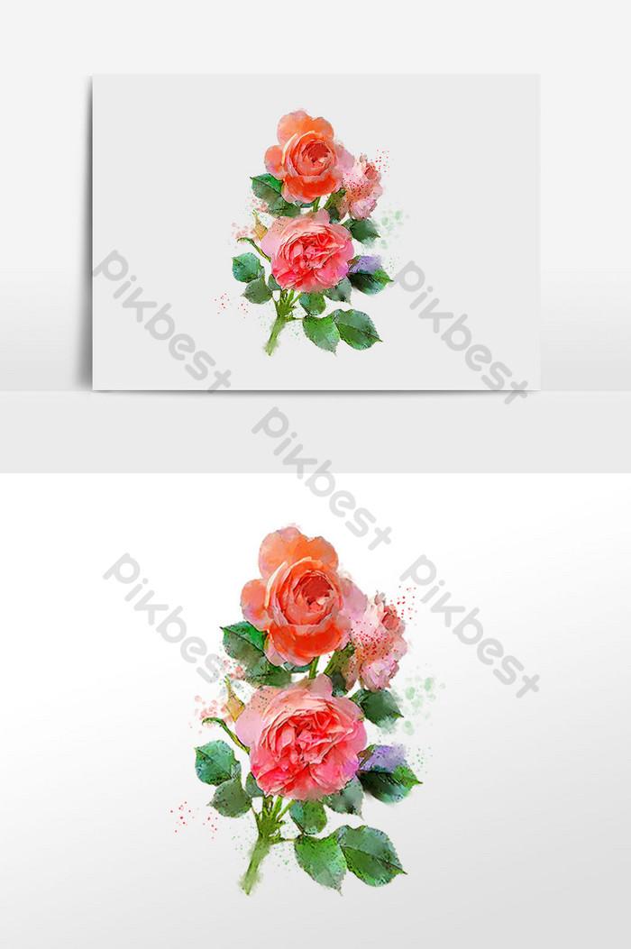 花系列三朵粉紅色的玫瑰花朵水彩手繪插圖