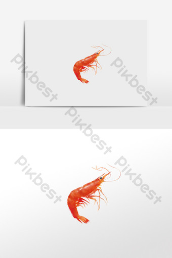 watercolor drawing seafood elements watercolor shrimp Illustration Template PSD