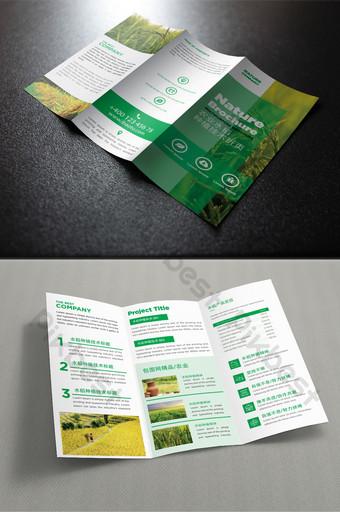 Dépliant en trois volets pour la promotion de la technologie de plantation de riz agricole vert Modèle PSD