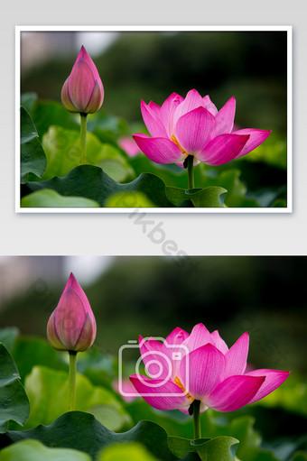 fotos de fotografía de flor de loto y hueso Fotografía Modelo JPG