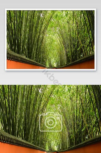 四川武侯temple竹林旅遊景點攝影圖片 攝影圖 模板 JPG