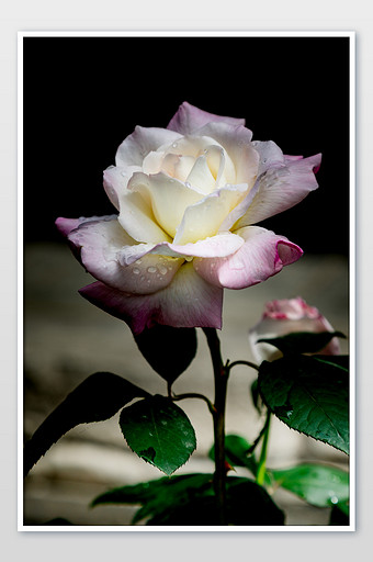 87+ Gambar Bunga Mawar Dan Kupu Kupu Paling Bagus