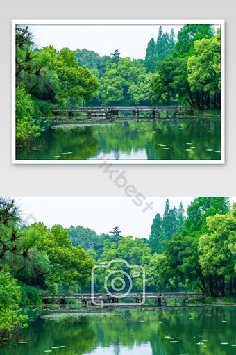 ويست ليك جمال شجرة كبيرة المناظر الطبيعية الخضراء خريطة التصوير عالية الدقة التصوير قالب JPG