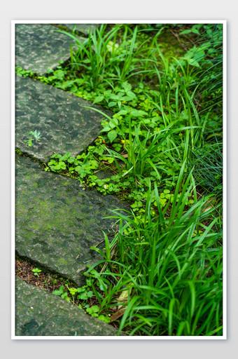 Roadside grass green mobile phone screensaver HD photography map Photo Template JPG