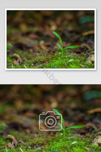 حديثي الولادة بعد قطرات المطر من الأسنان الخضراء الطبيعية الطازجة الصورة عالية الدقة التصوير قالب JPG
