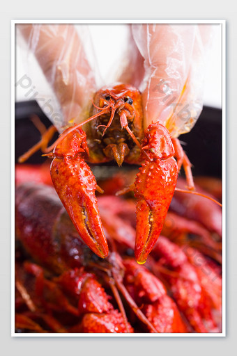 Hand picked up the crayfish vertical version to shoot red gourmet food stall seafood Photo Template JPG