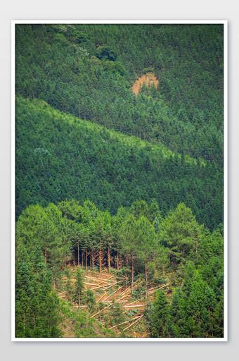 الغابات البكر الجبال الخضراء جبال الألب البيئة الطبيعية خريطة التصوير عالية الدقة التصوير قالب JPG