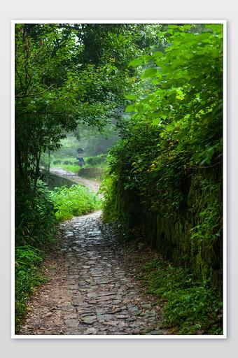 طريق البلد الحصى الصيف الأخضر منعش التصوير الفوتوغرافي التصوير قالب JPG