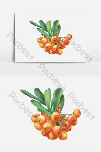 Sea buckthorn plant cartoon creative elements PNG Images Template PSD