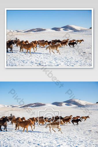 一百匹馬在藍天白雪皚皚的北部雪原中舞動 攝影圖 模板 JPG