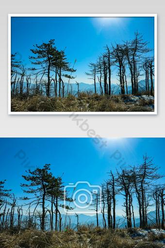cima de la montaña lluvia ramas de cedro seco retroiluminación silueta fotografía mapa Fotografía Modelo JPG