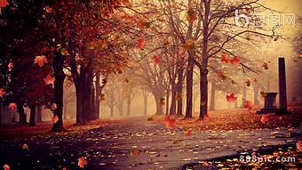 美麗的秋天落葉森林回憶背景視頻 視頻 模板 MP4