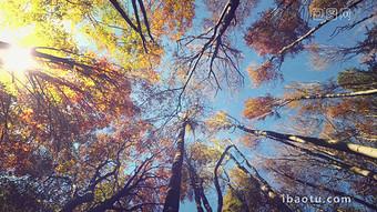 秋天的回憶森林4K循環動態背景高清視頻 視頻 模板 MP4