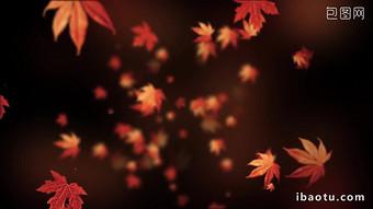 秋天秋天的落葉飄落的動態背景導致視頻 視頻 模板 MP4