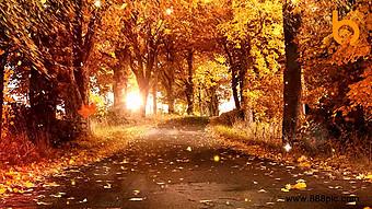 舞台背景上色彩鮮豔的秋葉 視頻 模板 MP4